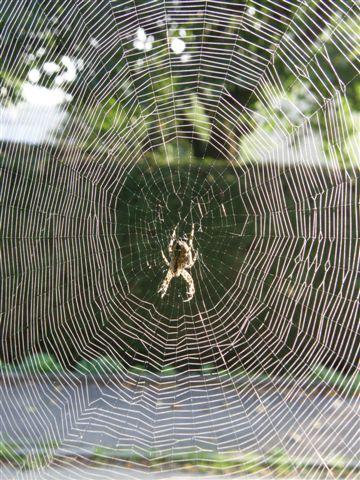 Spinnenkonstruktion